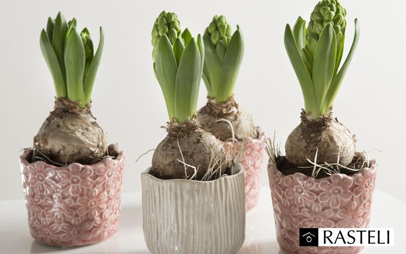 Rasteli Cache-pot Pots de jardin Jardin Bacs Pots  |