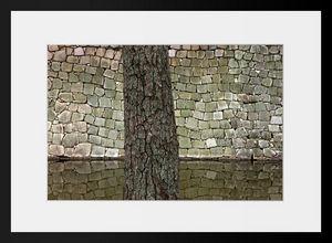PHOTOBAY - bois et pierre - Photographie