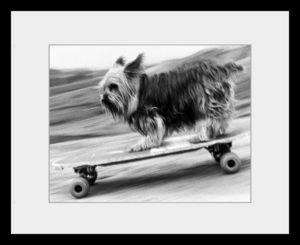 PHOTOBAY - skateboarding dog - Photographie