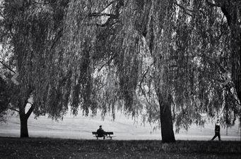 ALEX ARNAOUDOV - hampstead autumn - Photographie
