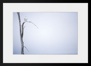 PHOTOBAY - harfang des neiges n° 4 - Photographie