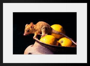 PHOTOBAY - voleur nocturne - Photographie