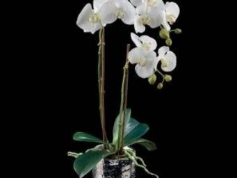 Deco Factory - orchid�e artificielle double pot argent silver - Composition Florale