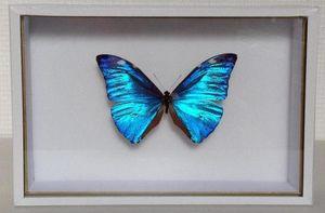 LA CHARNIÈRE ROUGE -  - Papillon