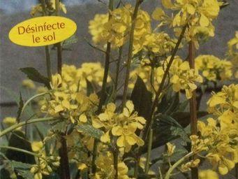 LES DOIGTS VERTS - moutarde blanche - engrais vert 500gr - Engrais