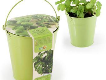 Radis Et Capucine - un pied de basilic à faire pousser dans sa cuisine - Potager D'intérieur