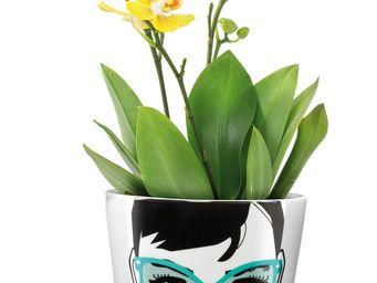 Donkey - bac � plantes - Vase � Fleurs