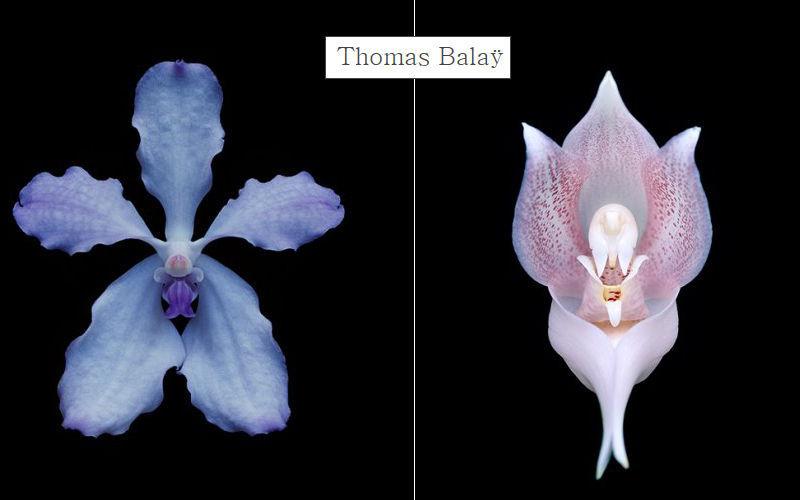 THOMAS BALAY Photography Photographs Art  |