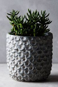ANTHROPOLOGIE -  - Plant Pot Cover