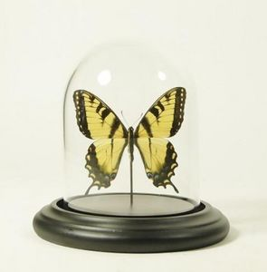 DE MUSEUM WINKEL.COM -  - Butterfly