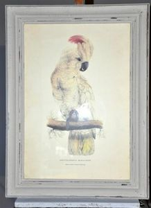 Demeure et Jardin - gravure cacatoes - Engraving