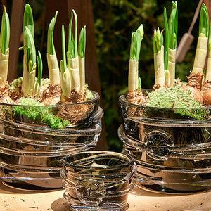 Sempre -  - Plant Pot Cover