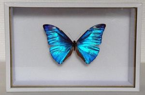 LA CHARNIÈRE ROUGE -  - Butterfly