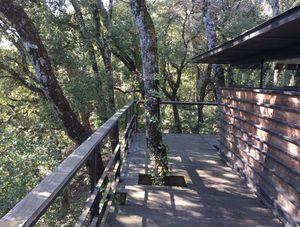 COPACABANON -  - Treehouse