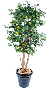 ARTIFICIELFLOWER - citronnier - Artificial Tree
