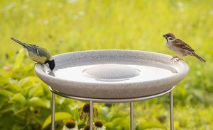 DENK -  - Birdbath