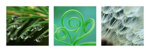Nouvelles Images - affiche nature en vert - Plakat