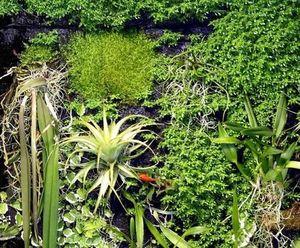 Patrick Blanc -  - Bepflanzte Wand