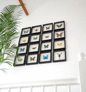 DE MUSEUMWINKEL.COM -  - Schmetterling