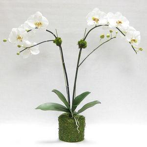 Bougainvillea -  - Kunstblume