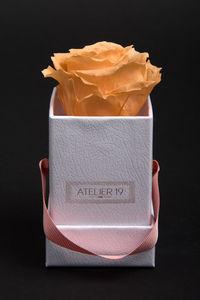 DECO SENS - box solo pêche velouté - Stabilisierte Blume