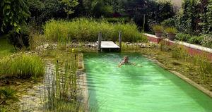 BIOTEICH -  - Schwimmbecken