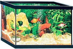 ZOLUX - aquarium 37 litres rectangulaire avec cornières 50 - Acuario