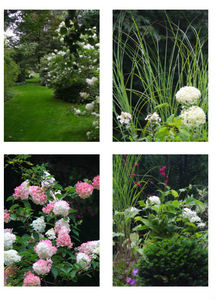 DRAW ME A GARDEN - jardin anglais - Jardín Paisajístico