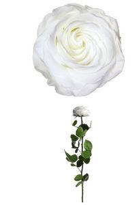 Verdissimo - rose à tige premium-- - Flor Estabilizada