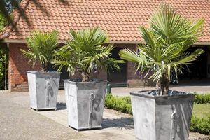 Livingstone Terrasso -  - Vaso Per Albero