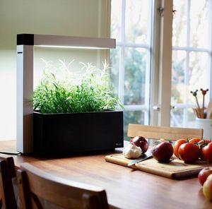 LA BOUTIQUE DES INVENTIONS - herbie - Giardino Interno