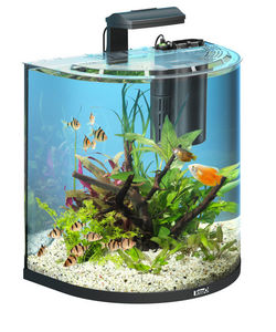 Tetra - aquarium aqua art explorer 60 litres - Acquario