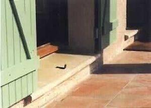 Gradino porta